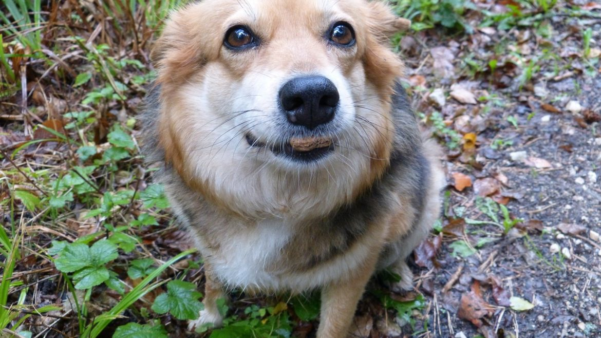 How your dog senses the world differently from you