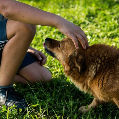 5 Surefire Ways to Show Your Dog You're The Boss