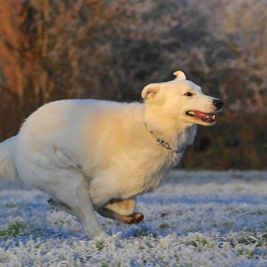 3 Simple Steps For A Healthier Dog