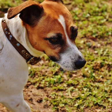 4 Things Frustrated Dog Owners Should Know