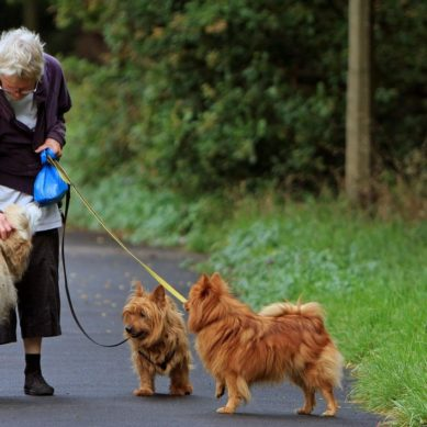 Older adults walk more for money and opportunity to donate to charity