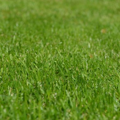 Advantages of artificial lawn