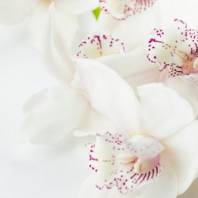 How to plant orchids