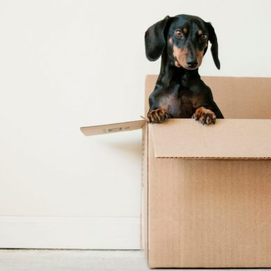4 reasons summer is the best time to move