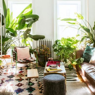 Garden rooms: fill every room of your house with plants
