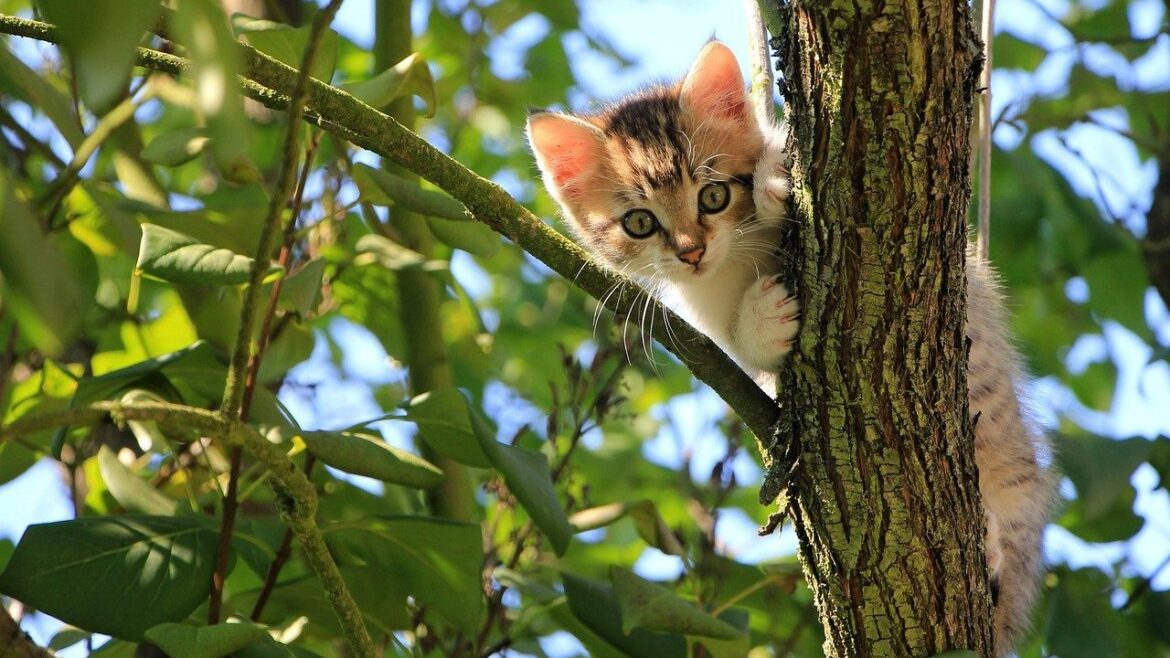 Feline leukemia, what it is, what symptoms it causes and what prognosis it has