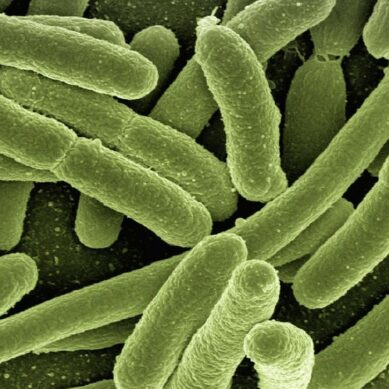 These are the diseases that are developing the most resistance to antibiotics